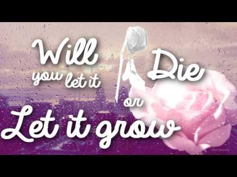 Roses - Shawn Mendes (Lyric)