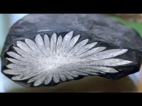 60 красивейших минералов и камней. Вариант 1