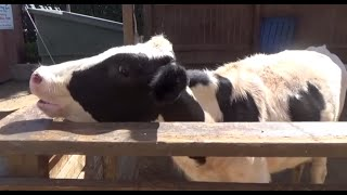 FARM ANIMALS & THEIR SOUNDS (Part 3)  Babies, Toddlers, Preschool, & K-3
