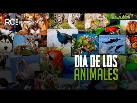 ¡DÍA DE LOS ANIMALES!