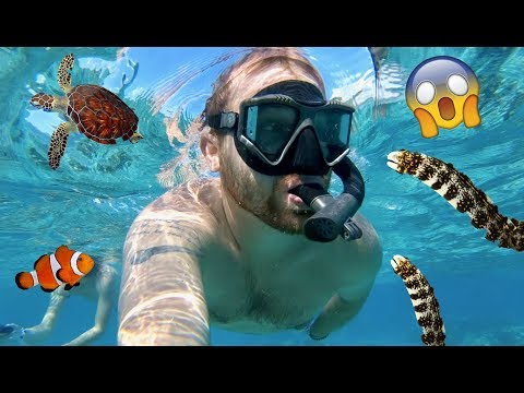 Living on Tropical Island! Swimming In Ocean! Sea Turtles & Baby Fish | Family Vacation Vlog