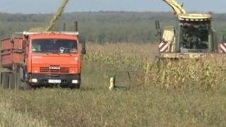 Продуктовый набор: экспорт сельхозпродукции из России показал шестикратный рост