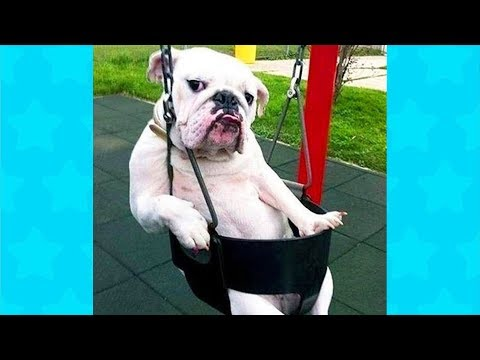 Stupid Dogs Doing Weird Things COMPILATION #2 ★ Funny Dogs Video