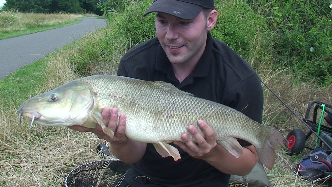 Barbel fishing at kings weir and the river lee youtube for Fishing kings free