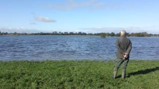 Gundog Training English Springer Spaniel Training Water Work