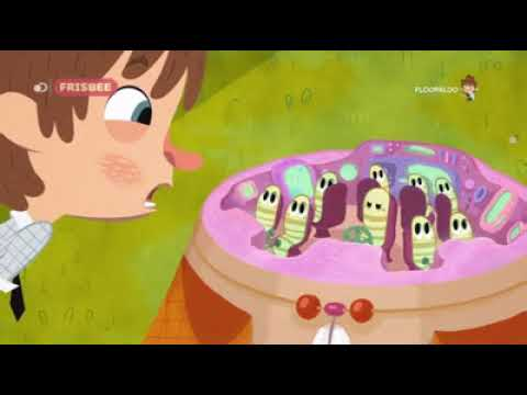 Floopaloo flapacha ou es tu floopaloo in tv cartone animato