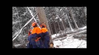 Video tree felling download MP3, 3GP, MP4, WEBM, AVI, FLV Desember 2017
