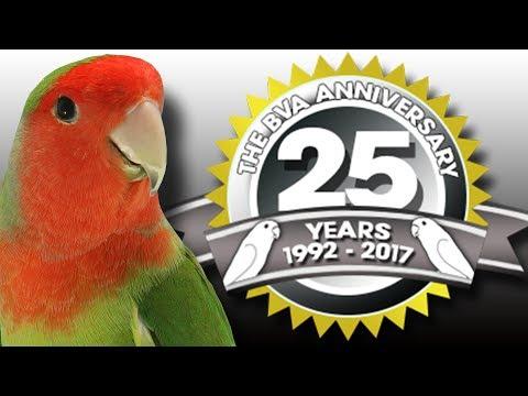 BVA Masters 2017  Lovebird International  Special tion