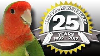 BVA Masters 2017 - Lovebird International Show Special Promotion