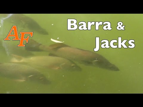 Fishing Video Lure Barramundi Fishing N Mangrove Jack Jungle Fishing Sight Casted Andysfishing EP.68