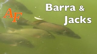 Fishing Video Lure Barramundi Fishing n Mangrove Jack Jungle Fishing Sight Casted Andysfishing EP.68