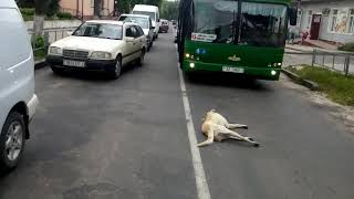 Зверство и беспридел в городе Ивацевичи, убивают животных на глазах у детей!