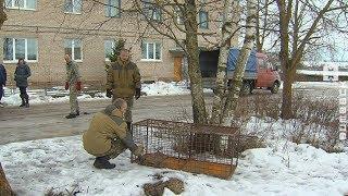 В Витебске и окрестностях усилили меры по отлову бродячих собак (21.02.2019)