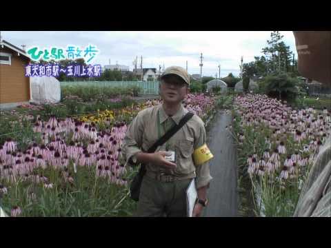 2010年8月4日 ちい散歩 ひと駅散歩 東大和駅~玉川上水駅