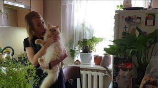 Видео-обзор наполнителя для кошачьего туалета ECO-Premium