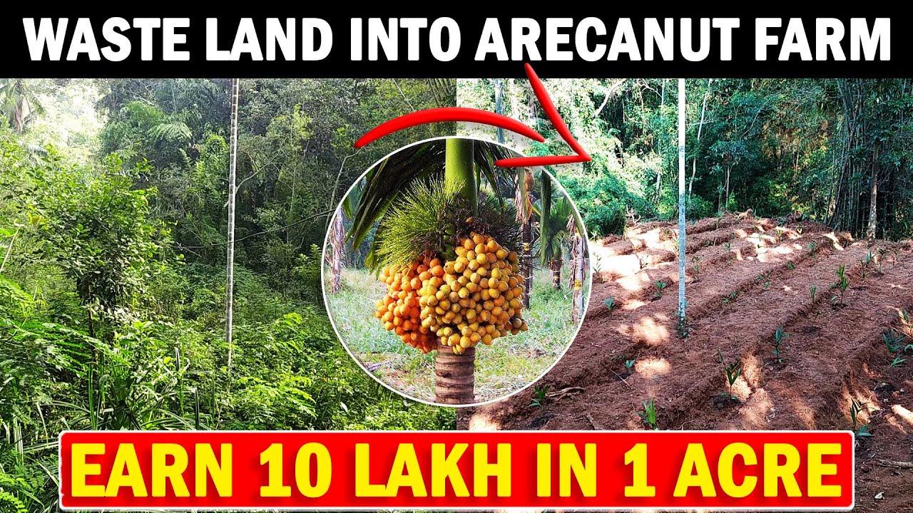 Turning Waste land Into Areca nut Farm | Areca Nut Planting Method | Areca nut Farming / Cultivation