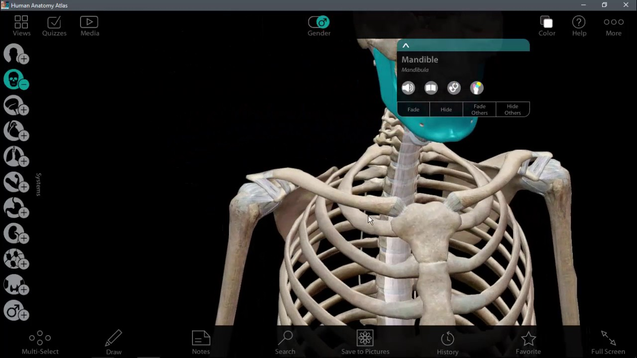 Atlas of human anatomy including studentconsult interactive.