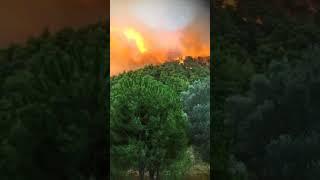 Πυρκαγιά Εύβοια 2