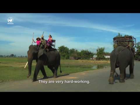 Taste of Vietnam 1 | tập 21: Khám phá Buôn Ma Thuột cùng Martin Yan
