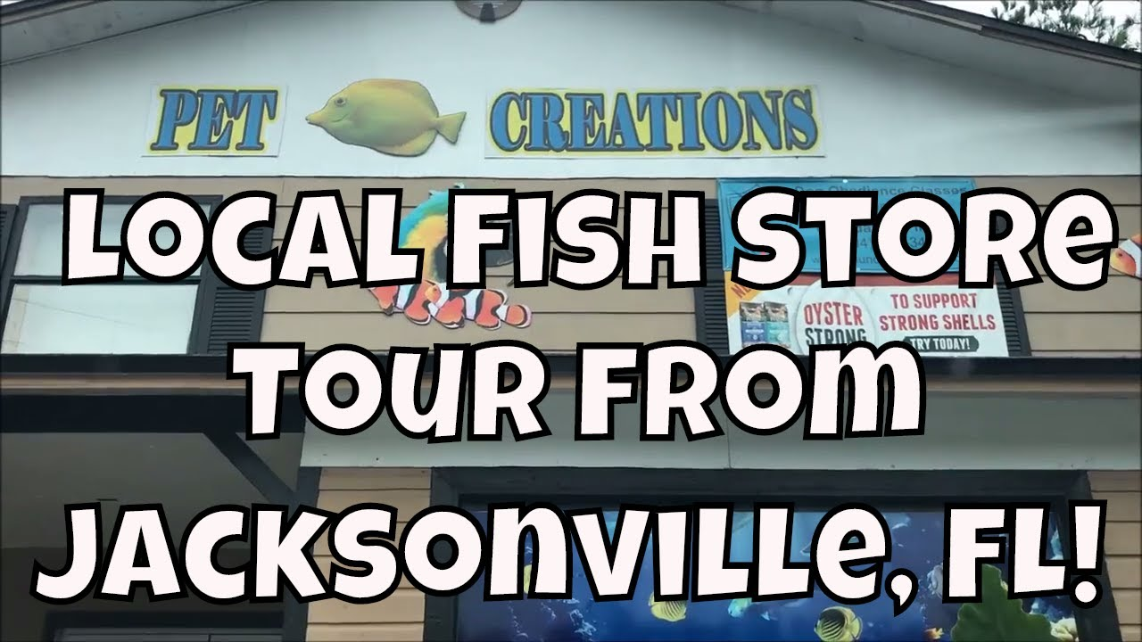 Fish Store Tour from Jacksonville, FL Pet Creations