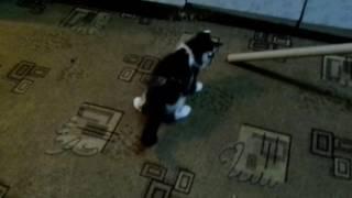 Отдадим в хорошие руки! Три коши и один кот дома - перебор)) Краснодар
