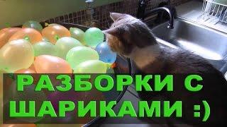 Видеоподборка Кошки и воздушные шарики, смешные приколы