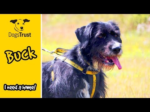 Bearded Collie Buck is Looking for a Doggie Role Model | Dogs Trust Harefield