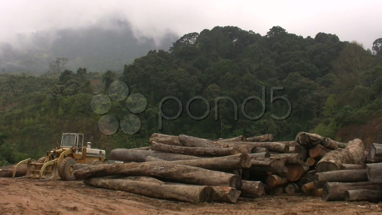 Rainforest Logging Industry Deforestation Jungle Forest Tropical ...