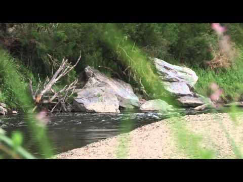 Wedding Call Mykey  A few wildlife clips and audio from Buchan Victoria