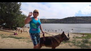 Собаки любят купаться!