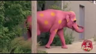 Розовый слон, прикол))