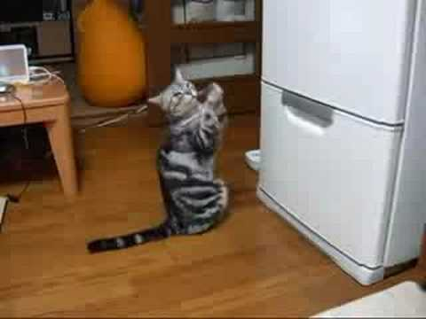 Cat begging for food - YouTube