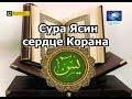 Сура Ясин это сердце Корана Чтение на арабском mp3