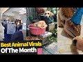 Top Viral Animal Videos - July 2019