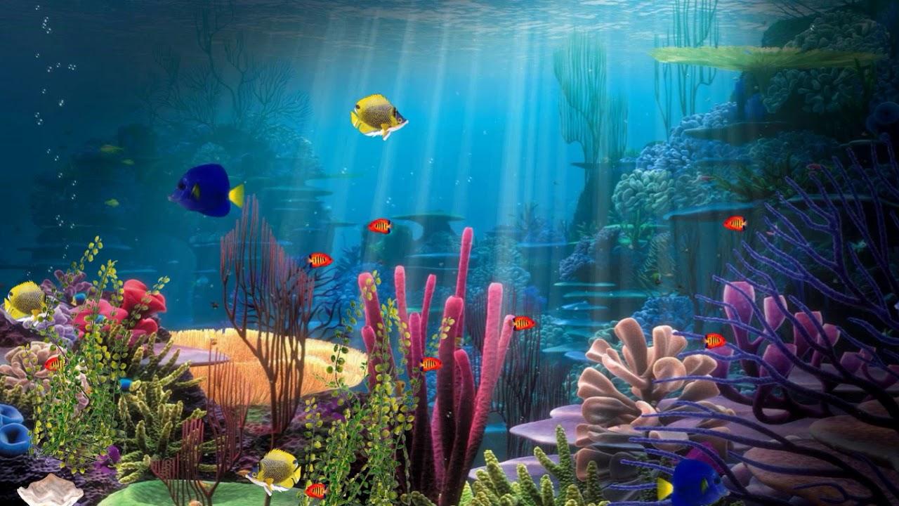 Free Aquarium Screensaver Nfsfishindeepwater