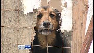 Участок для приюта бездомных животных ищут в Лазаревском районе Сочи