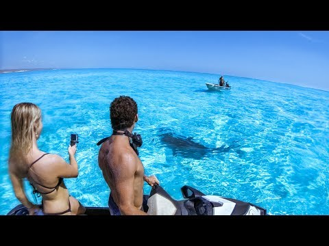 YBS Lifestyle Ep 4 - AMAZING CLEAR WATER   Hammerhead Shark Encounter   Chilli Crab Catch And Cook