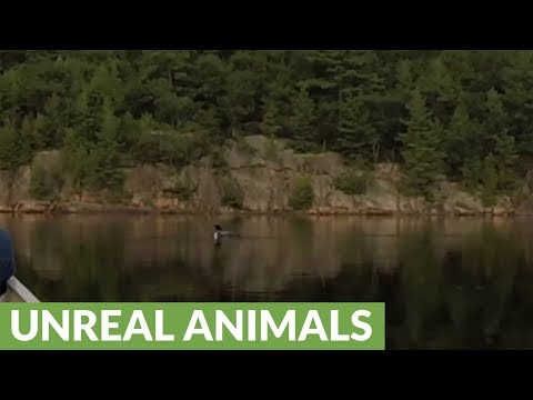 Couple In Canoe Have Unforgettable Conversation With Curious Loon