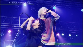 [Trailer]「The Animals in Screen Bootleg 2」ティザー映像/Fear, and Loathing in Las Vegas