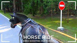 Поездка на лошади Horse Ride घुड़ सवारी 乗馬 말 حصان Kuda Pferd Cheval Caballo Морь At Жылқы Multicolor