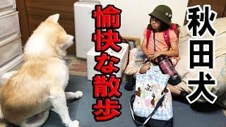 grandchild and JAPANESEAKITA 秋田犬そうすけ君、珍しく孫娘りりか 学...