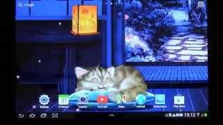 Sleeping Cat Live Wallpaper HD