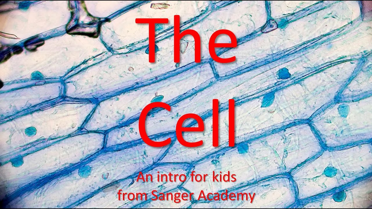 an introduction to the analysis of the cell membrane