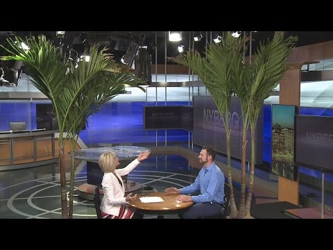 Fairfield man brings Florida palm trees to Connecticut