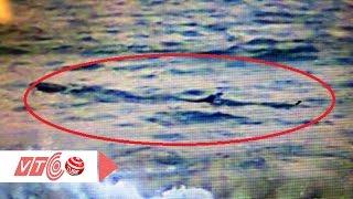 Phú Yên: Cá lạ xuất hiện gần bờ, cấm tắm biển | VTC