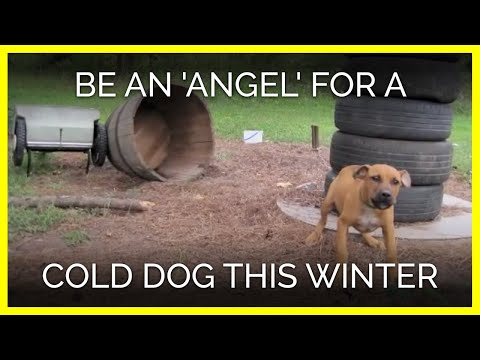 Please Be an 'Angel' for a Cold, Lonely Dog This Winter