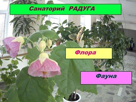 Санаторий Радуга.....сезон 2020...Флора и Фауна (попугаи,черепахи,шиншиллы и много цветов)