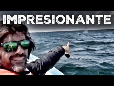 Junto a la ballena gris en México. Vlog #98