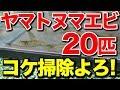【庭の池】池のコケ掃除のためヤマトヌマエビ20匹投入 #141 2018.9.16