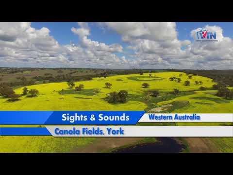 VTN | Sights Sounds | Canola Fields | York | Western Australia